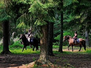 4 Days Guided Horse Riding Holiday in Jönköping Area, Sweden