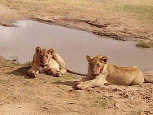 3 Days Maasai Mara Joining Safari in Kenya
