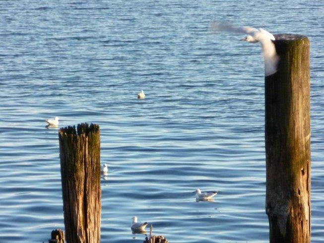 5 Tage Yoga und Ayurveda Retreat in Salem am Bodensee