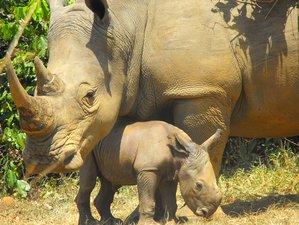 3 Days Murchison Falls National Park Safari in Uganda