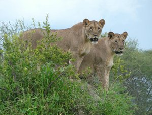 5 Days Unforgettable Mid-range Wildlife Safari Tour in Tanzania