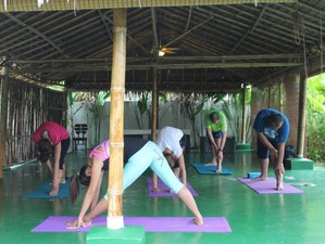 4 Days Raw Food Detox and Yoga Retreat in Thailand