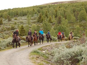 5 Days Magnificent Mountain Trail Horse Riding Holiday in Norway