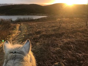 6 Day Under the Mystique Midnight Sun Horse Riding Holiday in Kerlingaskógur