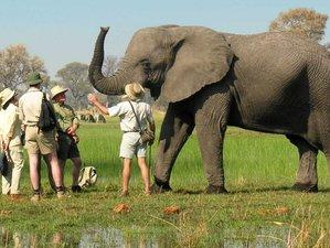 18 Day Safari Luxury Sanctuary Retreats in Tanzania, Zambia, and Botswana