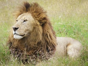 6 Days Serengeti National Park and Ngorongoro Crater Safari in Tanzania