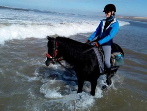 8 Day All Inclusive Ranch Equestrian Activities with Yoga Holiday in Agadir