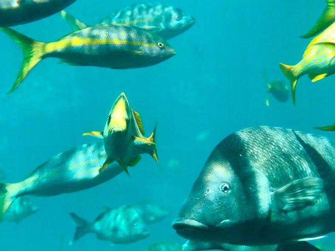 Habitat: Ocean / Marine safaris