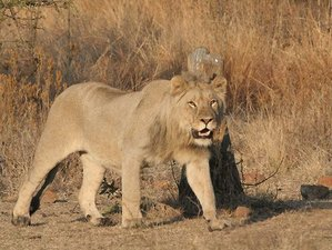 4 Days Luxury Kruger National Park Safari