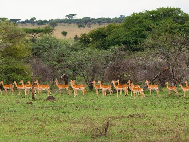 8 Days Northern Circuit Tanzania Safari