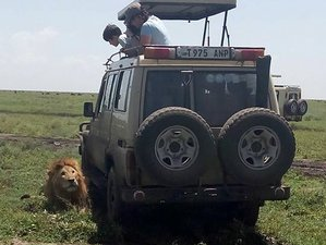 4 Days Amazing Lake Nakuru and Maasai Mara Safari in Kenya