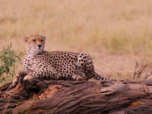 4 Day Tsavo West, East, and Amboseli Park Budget Safari in Kenya