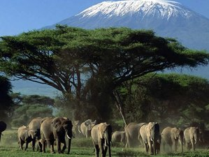 4 Days Amboseli, Tsavo, West and East Mombasa, and Nairobi Safari in Kenya