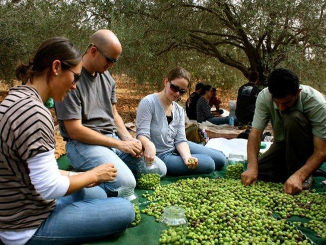 5 Days Olive Harvest Holidays in Jordan