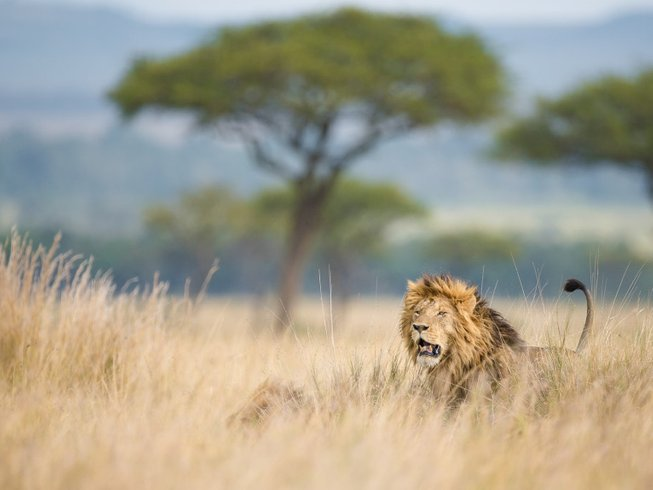 7 Days Photography Safari in Kenya