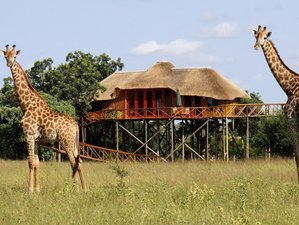 4 Days Treehouse Safari in South Africa