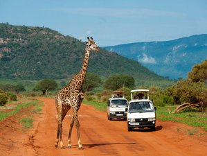 3 Days Classic Safari in Amboseli National Park, Kenya