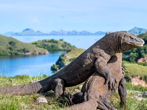 3 Days Komodo Liveboard Wildlife Tour in Indonesia