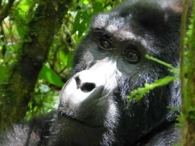 13 Days Gorilla Safari in Uganda