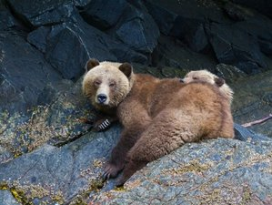 5 Day Orcas and Grizzlies Wildlife Tour in British Columbia, Canada
