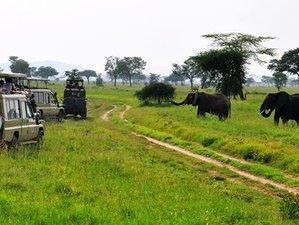 7 Days Luxury Safari in Serengeti, Ngorongoro, Tarangire, Lake Manyara National Parks, Tanzania