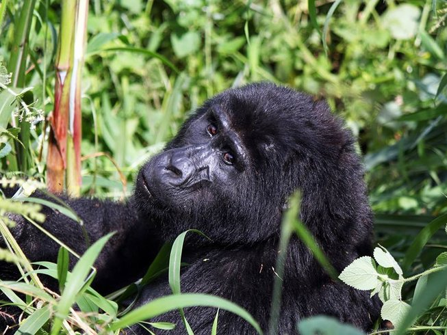 8 Days Uganda Primate Safari