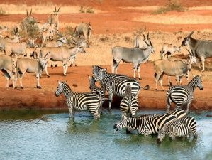 6 Days Essential Safaris in Kenya