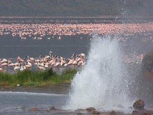2 Days Guided Flamingo Safari to Lake Bogoria and Lake Nakuru from Nairobi, Kenya