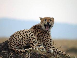7-Daagse Grote Trek Safari in de Magische Maasai Mara en de Great Rift Valley Lakes in Kenia