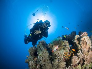5 Day Rocked By The Waves: Diving Tour in Aqaba of the Red Sea
