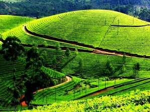 7 Day Wellness Yoga Holiday with Silent Walks and Meditation in Unforgettable Munnar,