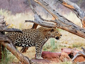 12 Days Cape & Namibia Serviced Camping Safari in South Africa and Namibia(CWAC)
