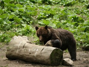 10 Days Bird and Bear Watching Wildlife Tour in Romania