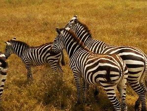 7 Days Balloon Safari in Kenya
