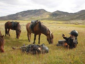 6 Day Volcano Horse Riding Holiday in Ölfus, Reykjavík
