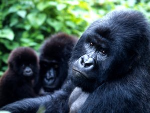 12 Days Gorilla and Wildlife Safari in Uganda