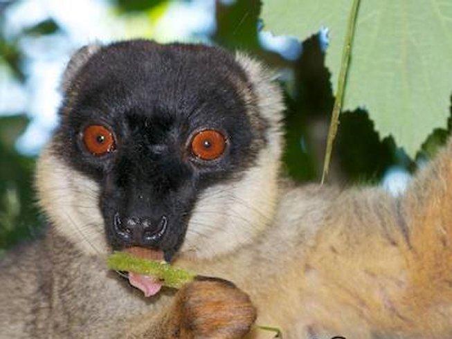 14 Days Luxurious Conservation Safari in Madagascar