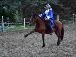 5 Day French Academic Dressage from Initiation to Perfecting in Saint-Clement, Auvergne