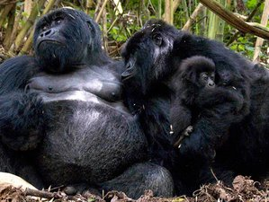 6 Days Mountain Gorilla Tracking, wildLife Game Viewing and Lake Bunyonyi Safari in Uganda