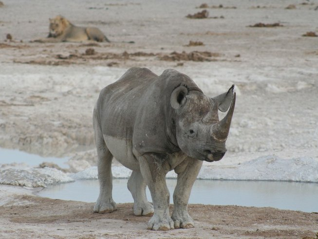 3 Days Safari in Etosha National Park, Namibia