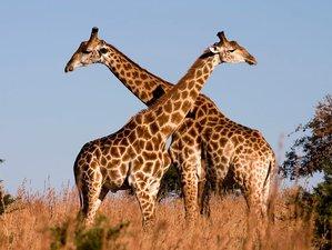 8 Days Adventure Safari and Beach Holiday in Kenya