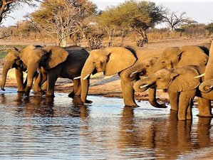 2 Days Wonderful Okavango Delta Safari in North-West District, Botswana
