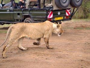 5 Days Kenya Lodge Safari Maasai Mara and Amboseli National Park