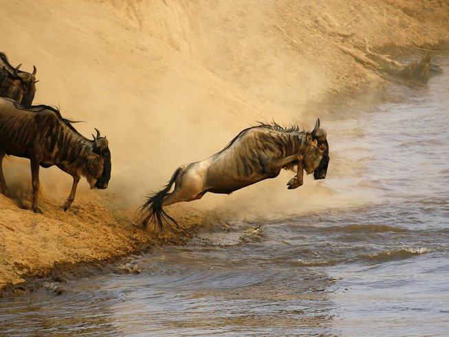 9 Days African Wildlife Safari in Kenya