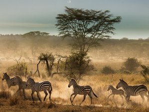 10 Days Extraordinary Northern Tanzania Safari