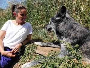 3 Day Women Rising Wild with Wolves Retreat in Westcliffe, Colorado