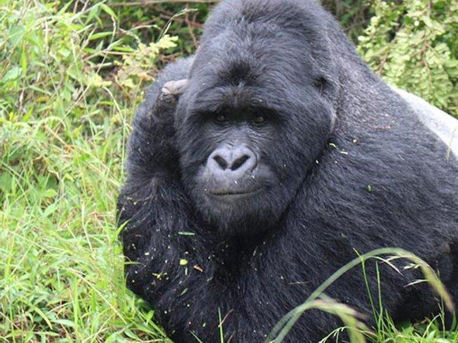 3 Days Gorilla Safari in Rwanda