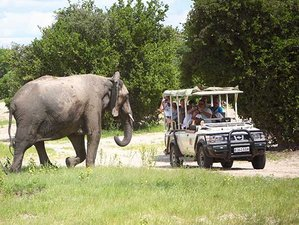 4 Days Victoria Falls Panoramic Safari in Zambia and Botswana