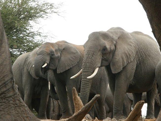 3 Day Kruger National Park Safari in South Africa