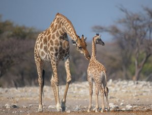 3 Days Etosha National Park Accommodated Safari in Namibia